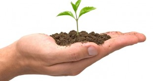 seed-investment